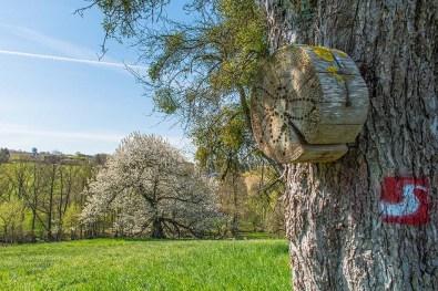 Baumscheibe für Bienen