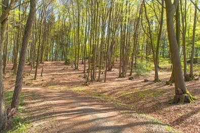 Lichtes Waldstück
