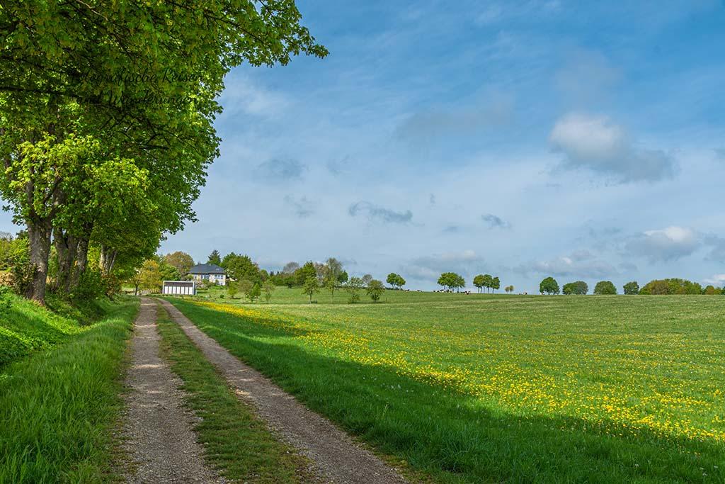 Feldweg nach Steinfelderheistert