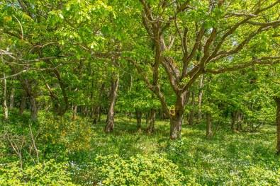 Wiesen unter alten Bäumen