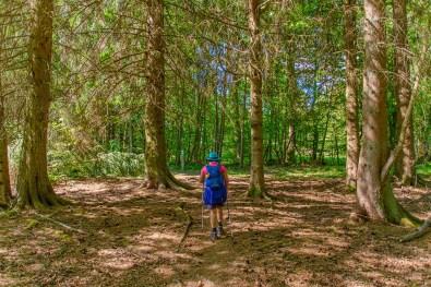 Im Wald vor Marmagen