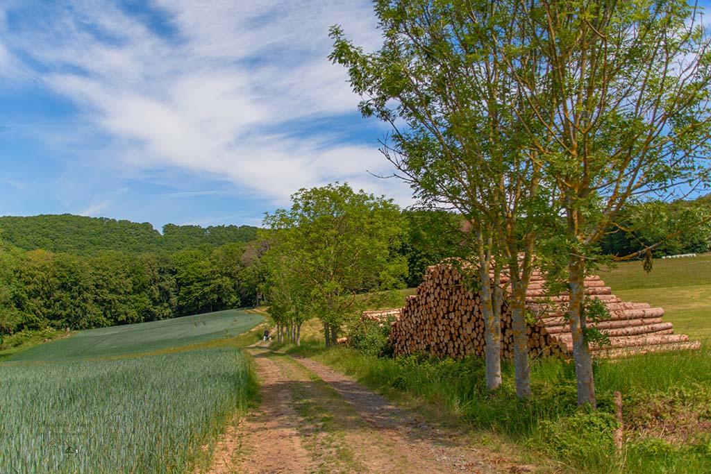 Hohe Holzstapel am Wegrand-Rund um den Minderberg