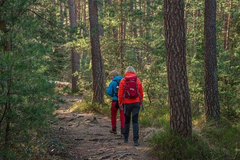 Mitten im Pfälzer Wald