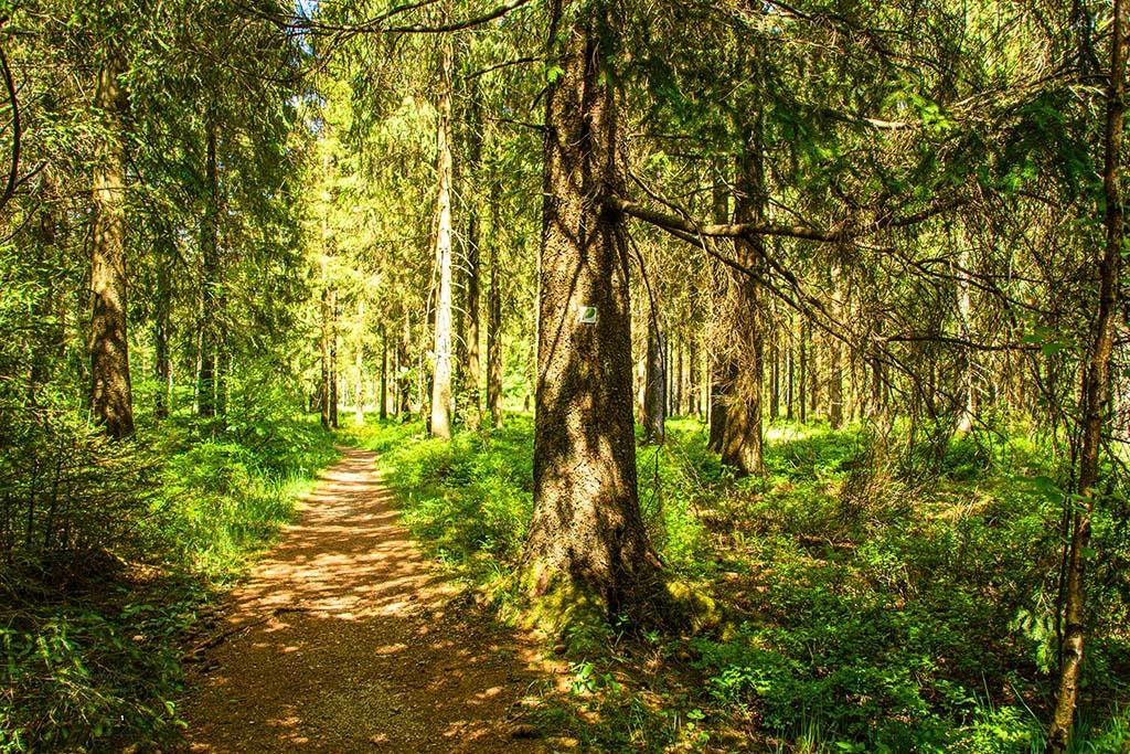 Das Zeichen des Walderweges führt mich zuverlässig