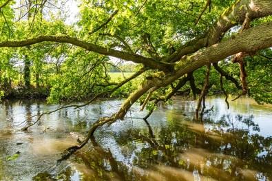 Bäume die ins Wasser ragen