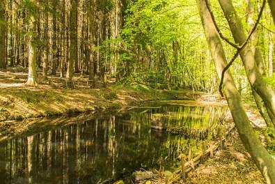 Teichanlage bei Eckhausen