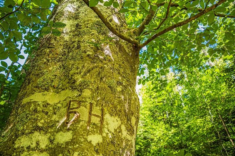 Beschrifteter Baum