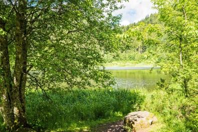 Am Sankenbachsee
