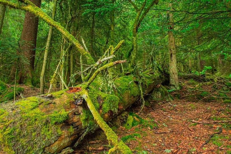 Totholz am Glaswaldsee