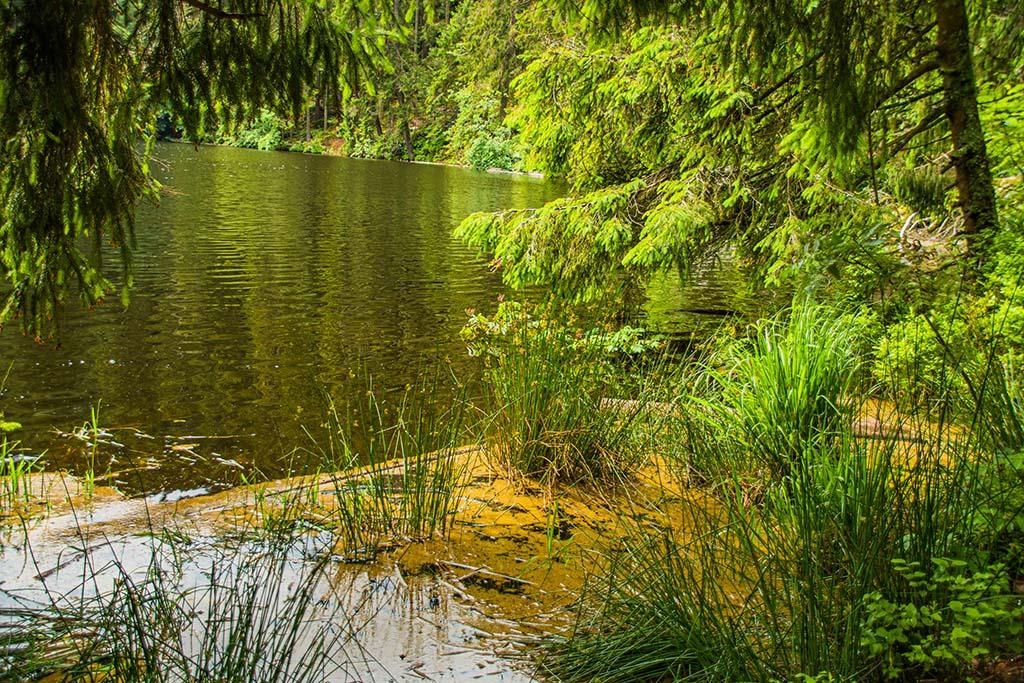 Idylle am Glaswaldsee
