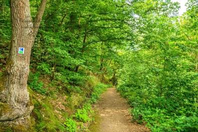 Waldwege in Weinbergsnähe