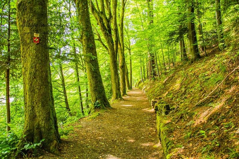 Balkonweg durch den Wald