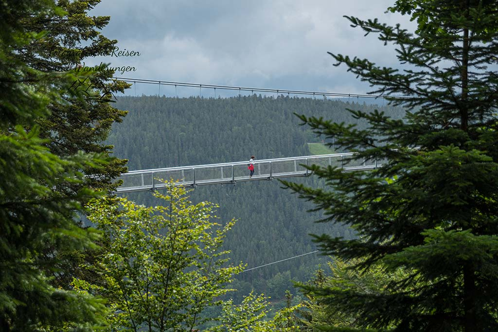The Bridge in Blackforest