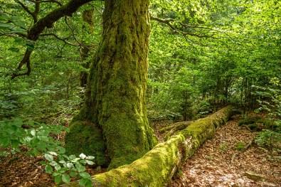 Tote Bäume wie im Urwald