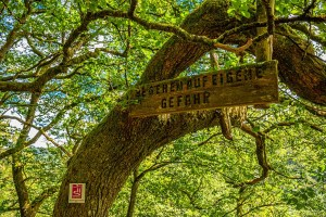 Rcokenburger Urwaldpfad
