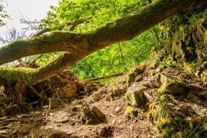Quer liegender Baum
