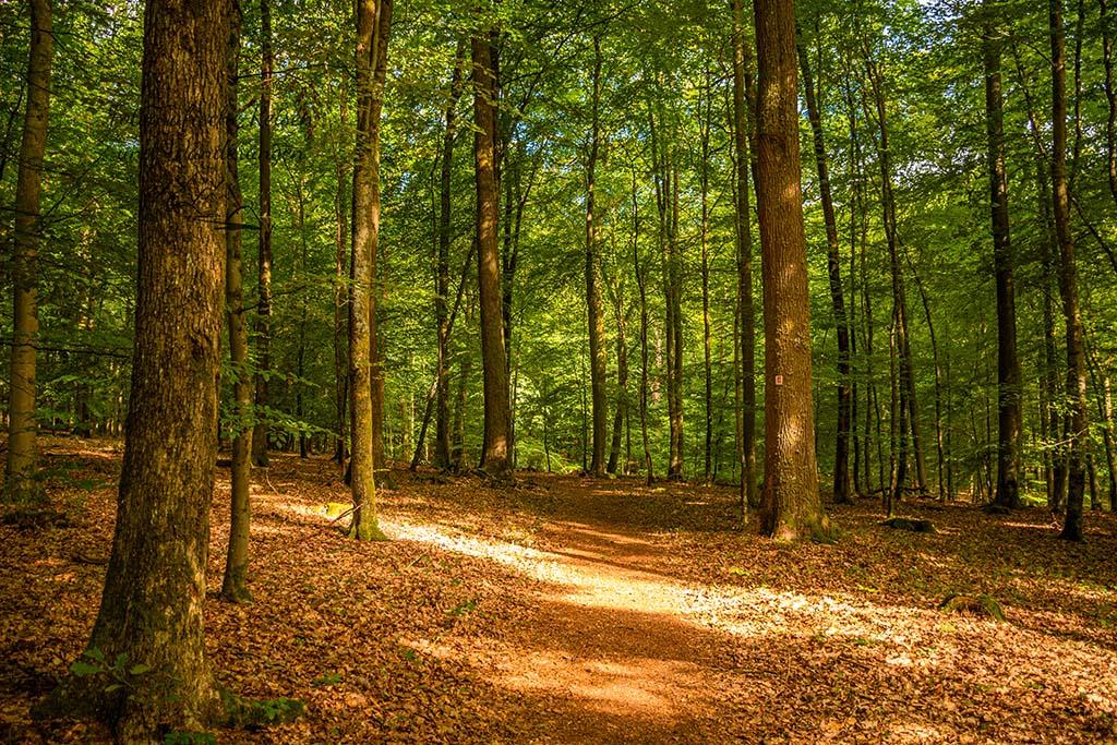 Traumschleife Rockenburger Urwaldpfad
