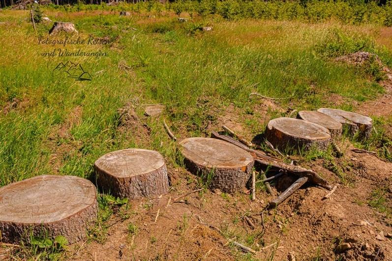 Tote Fichtenwälder