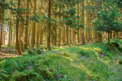 Zarten Gräser im Wald