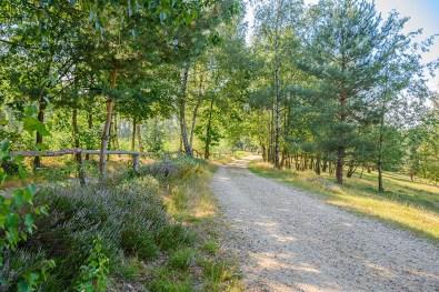 Teverener Heide (90)