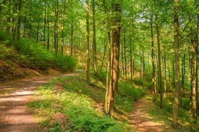 Waldwege auf dem Wäller Schnippel