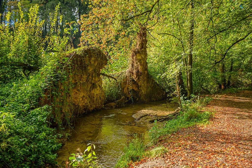 Ein kleiner Bach und umgestürzte Bäume
