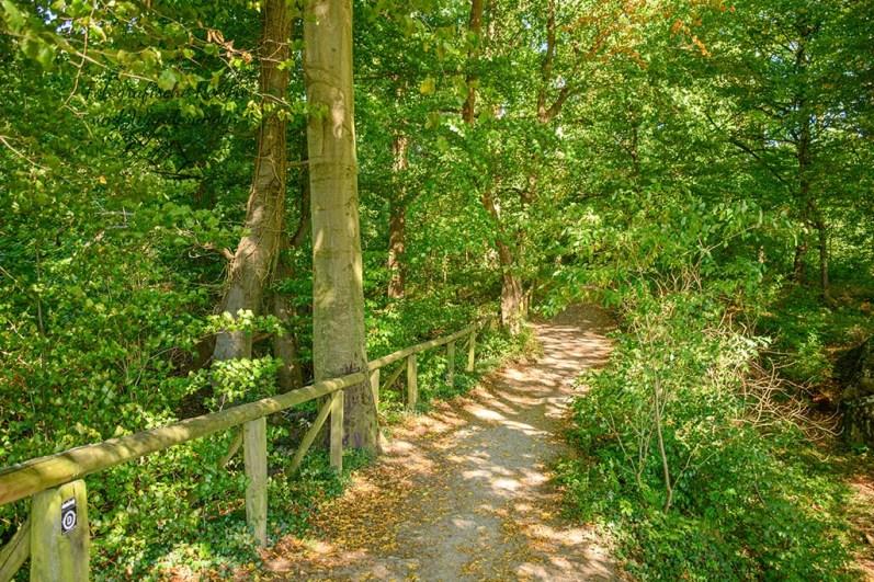 Helle Wege im hohen Buchenwald