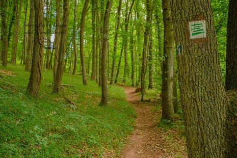 Moselsteig Seitensprung König-Johann-Runde
