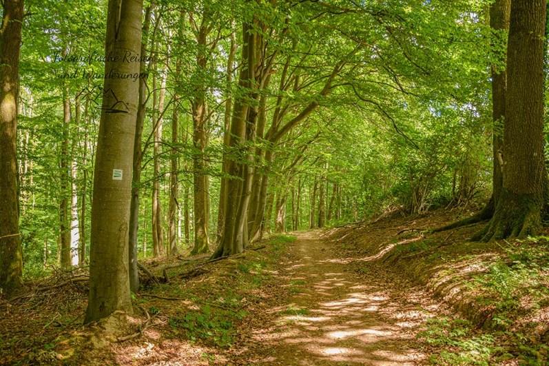 Waldwege - Moselsteig Seitensprung König-Johann-Runde