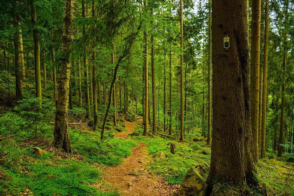 SChmaler Waldpfad im Nordschwarzwald