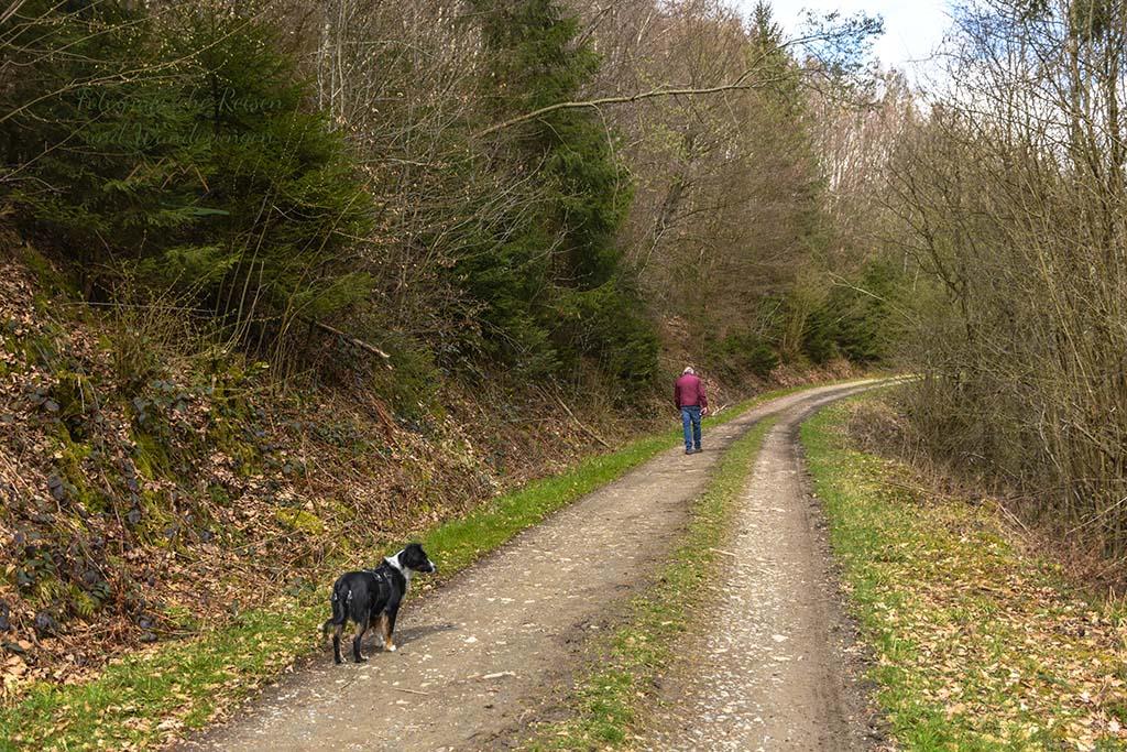 Wanderhund Jana