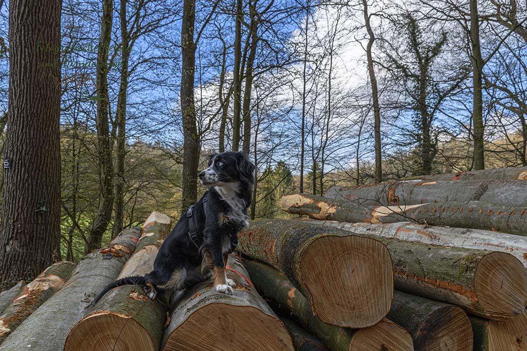 Mit Wanderhund im Bergischen Land