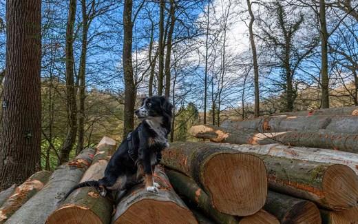 Wanderhund im Bergischen Land