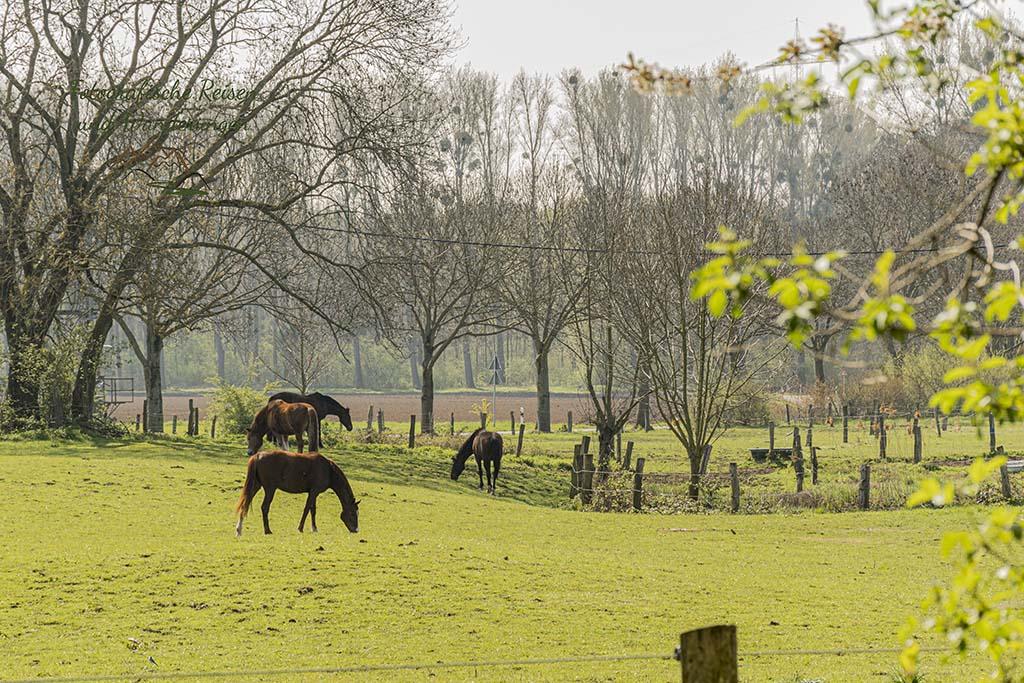 Pferdewiesen am Haus Bürgel
