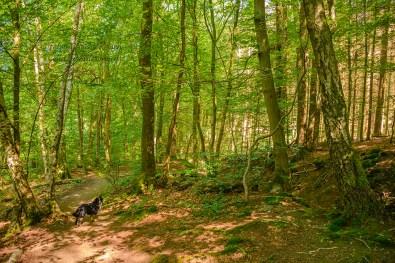 JAna im Wald