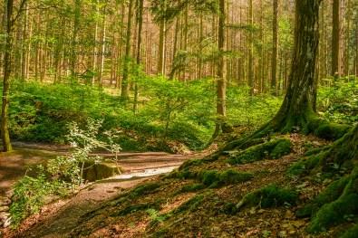 Grüne Füße eines Baumes