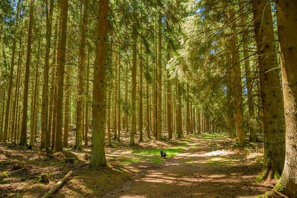 EifelSchleife Wo Wälder rauschen