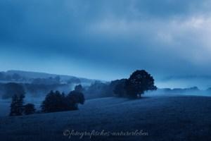 blaue Stunde, Wiesen und Bäume in Nebel gehüllt