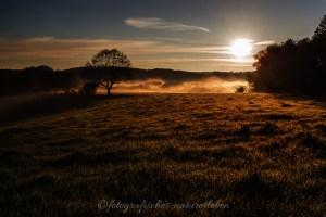 Wiese mit Nebel im Sonnenaufgang