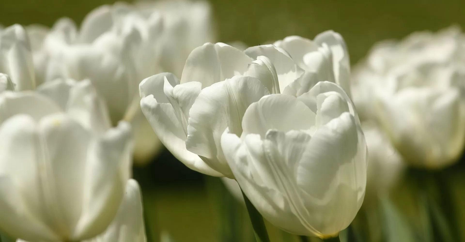 fiori-fauna-natura-animali