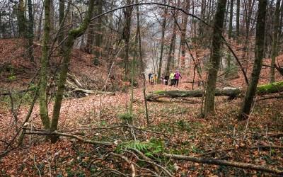 Rašica trail 2017