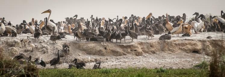 Senegal-Afryka-Trybalski_6117