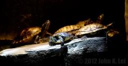 Cowabunga, turtles having a snooze!
