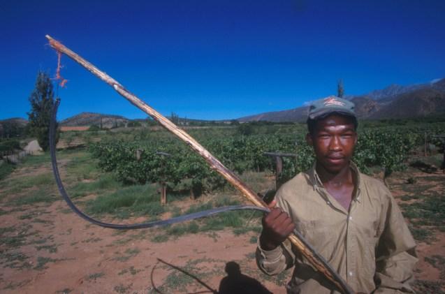 Sudáfrica, Karoo, espanta las aves con un sonido de látigo de los viñedos, retrato