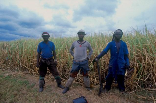 Sudáfrica, Natal Kwa-Zulu, Empangeni, trabajadores de la caña de azúcar, retrato