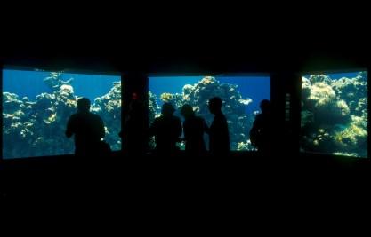 Israel, Eilat, Mar Rojo, observatorio marino, Acuario