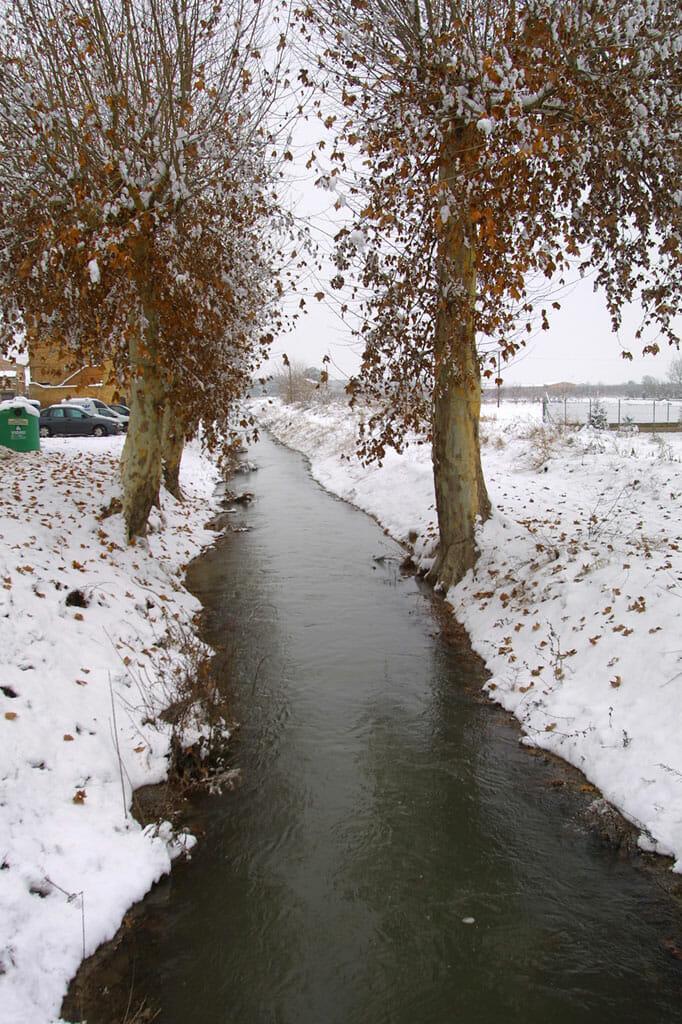 Pla D'Urgel, Mollerusa, árbol