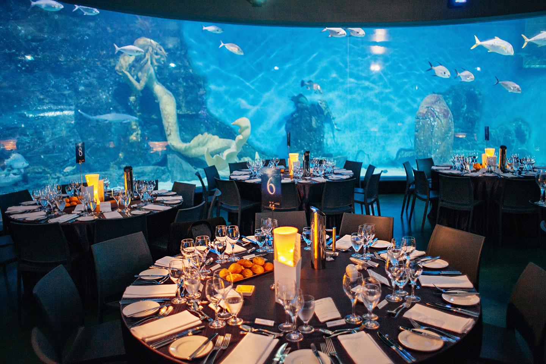 Melbourne aquarium wedding unique wedding venue  fotoJOJO  Melbourne Wedding Photojournalist