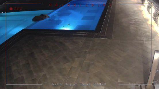 мече в басейн в Сопот