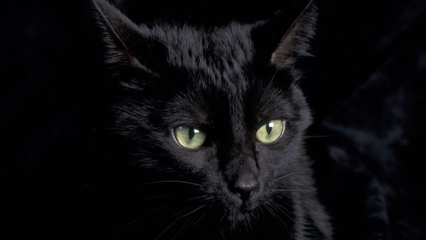 ojos-de-un-gato-negro